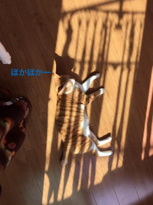 fc2blog_201511251504557d5.jpg