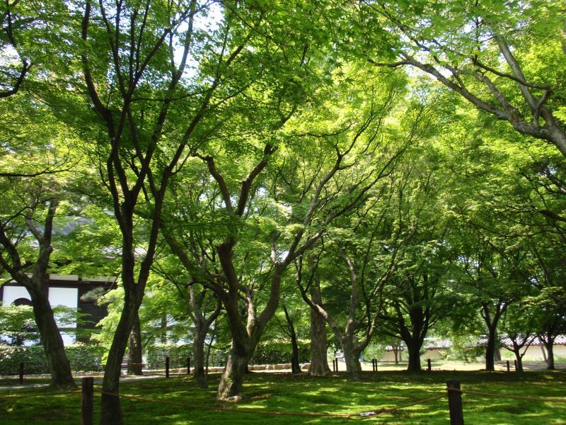 東福寺18