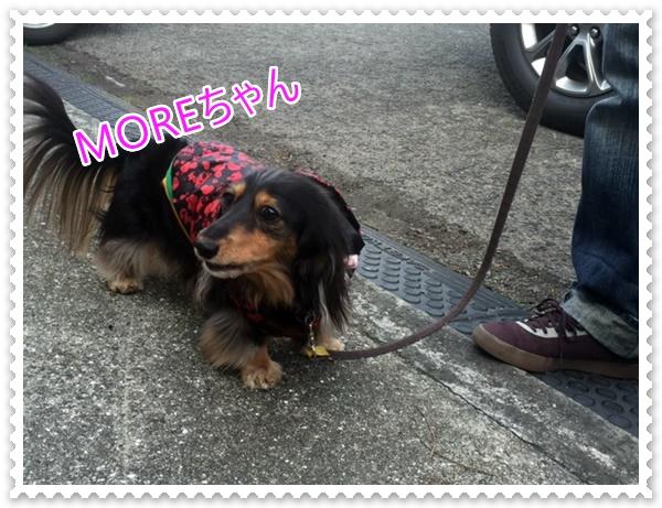 MOREちゃん