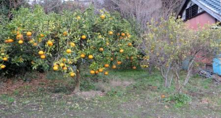 2015_12 22_冬の果樹・2