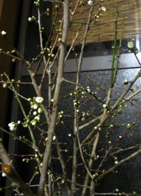 2016_01 28_寒の梅と椿・1
