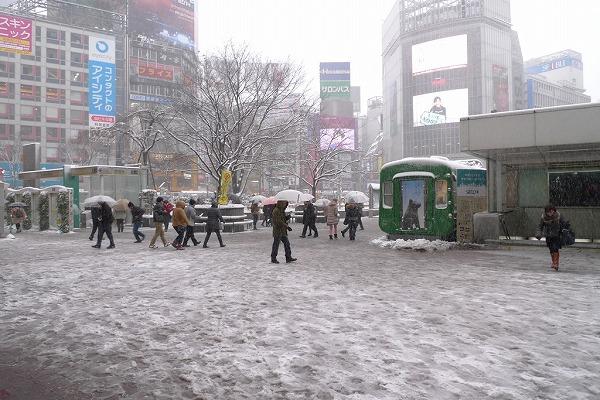 SHIBUYAYUKI.jpg