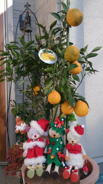 鉢植えのデコポン