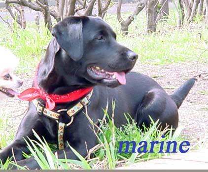 marine20020318.jpg