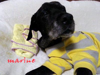 marine20151126.jpg
