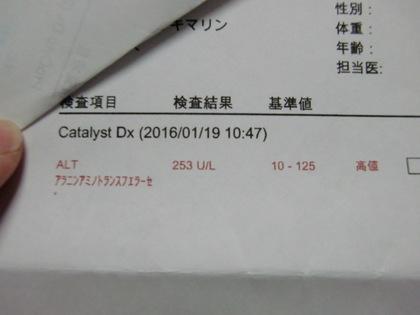 gQf_xiGfL1AG_I51453639354_1453639375.jpg