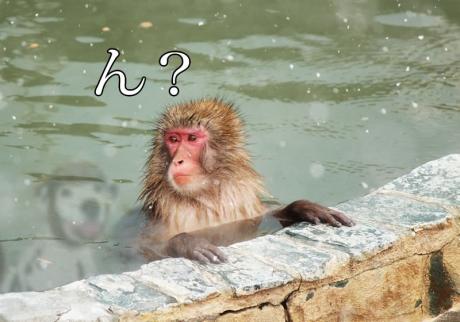 猿「ん?」