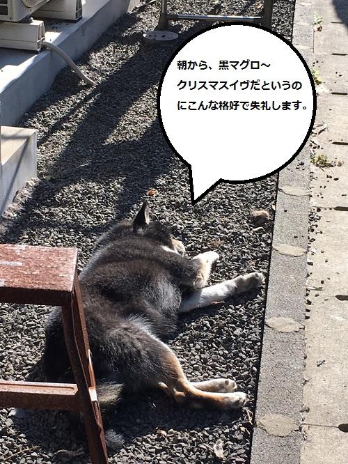 まるちゃん2015122401