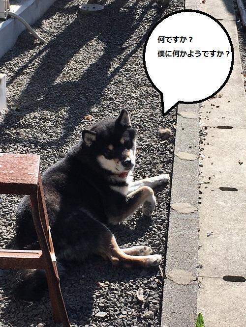 まるちゃん2015122402