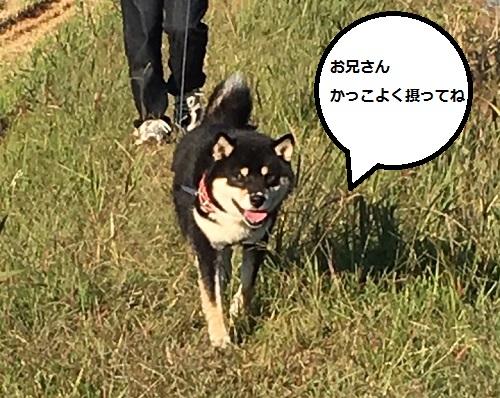 まるちゃん2015122801