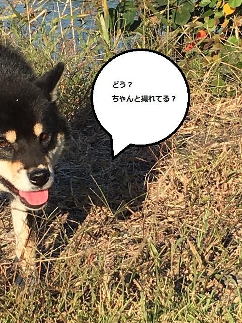 まるちゃん2015122802