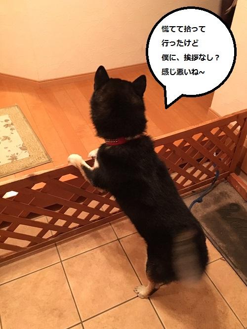 まるちゃん2016012403