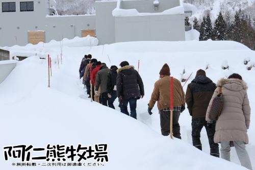 熊牧場 冬眠観察 2016-02