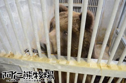 熊牧場 冬眠観察 2016-03