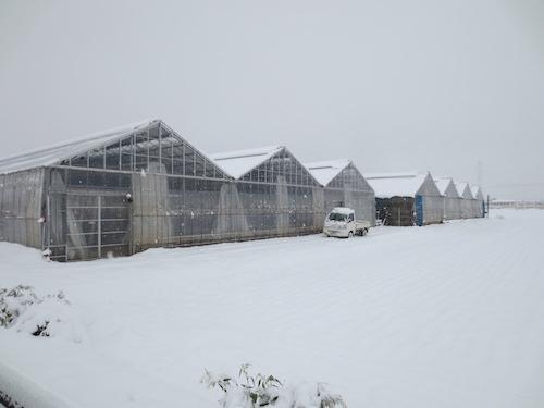 20160118 大雪3