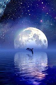 月とイルカ