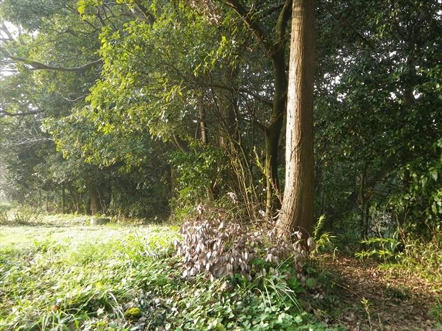 近所の森-1