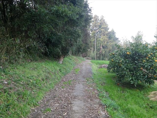 近所の森-7