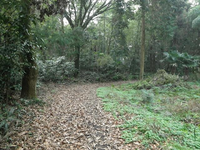 近所の森-8