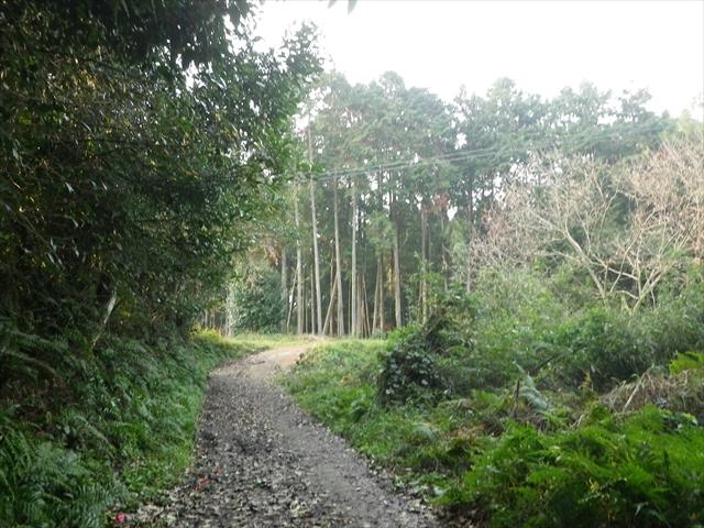 近所の森-10