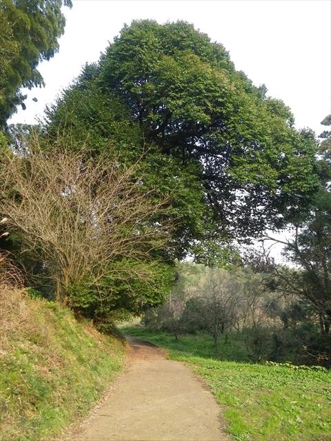 近所の森-12