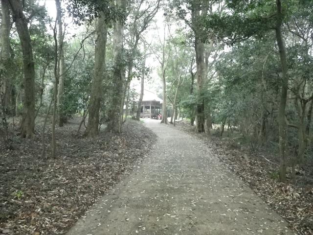近所の森-14