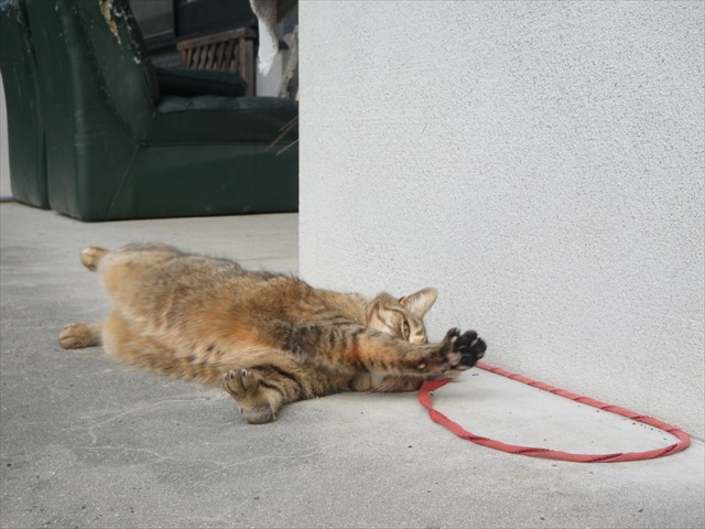 足の不自由な猫ちゃん