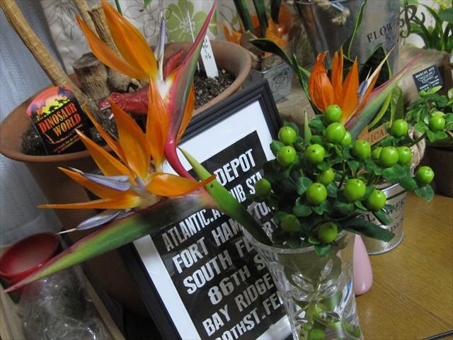 極楽鳥花(ストレリチア)大と小、ヒペリカム