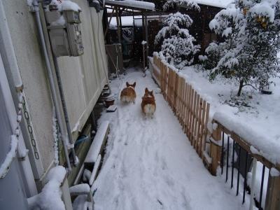 ☆雪のお庭ドッグラン2