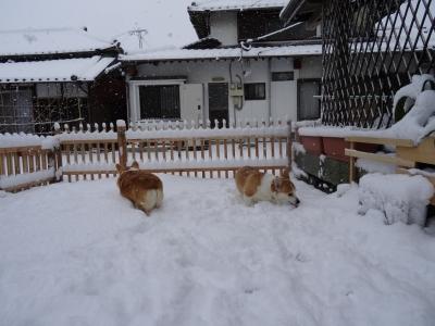 ☆雪のお庭ドッグラン