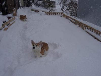 ☆雪のお庭ドッグラン3