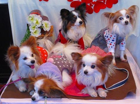 パピヨン祭~☆彡