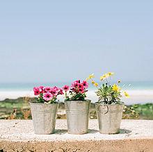 バケツの中の花