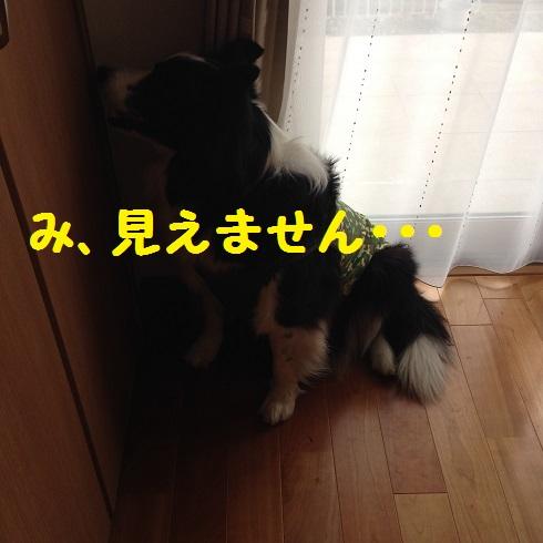 IMG_4922_20160207082934ba7.jpg