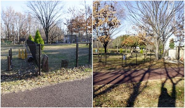 20151219川越公園4