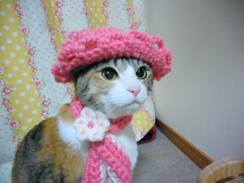 みくピンク毛糸おすまし