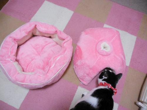 ピンク猫鍋