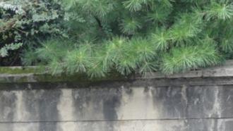 けいおん!聖地巡礼 平沢邸の通りから北山通(二股に分かれる交差点)