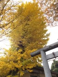 20151206三鷹の黄葉・紅葉2