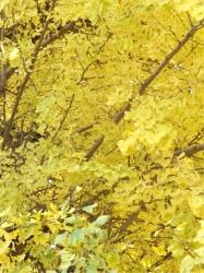 20151206三鷹の黄葉・紅葉3