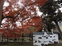 20151210山本有三記念館黄葉0