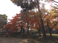 20151210山本有三記念館黄葉2