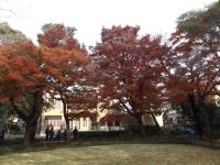 20151210山本有三記念館黄葉5