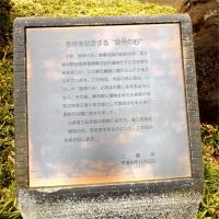 20151210山本有三記念館黄葉7