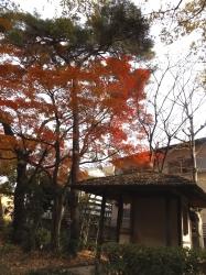 20151210山本有三記念館黄葉8