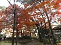 20151210山本有三記念館黄葉9