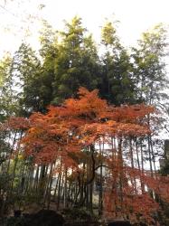 20151210山本有三記念館黄葉10
