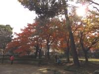 20151210山本有三記念館黄葉11