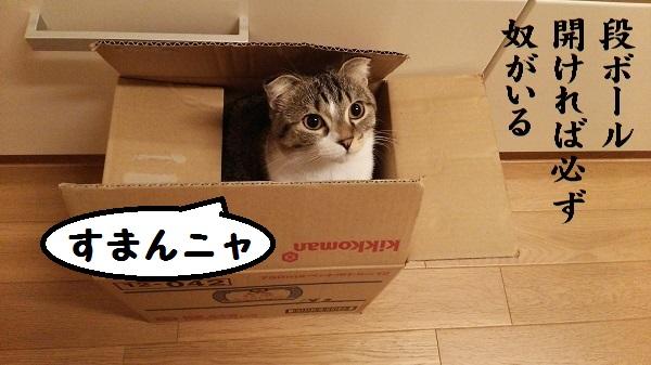猫川柳(段ボール)
