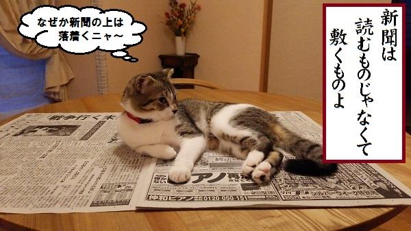 川柳 新聞は敷くもの
